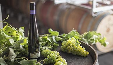 חבית יין ועליה בקבוק יין ואשכולי ענבים ירוקים